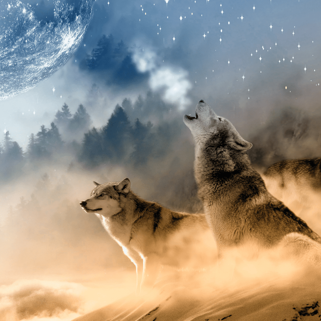 rencontre-animaux-totem-annecy-meythet-cabinet-wakanda