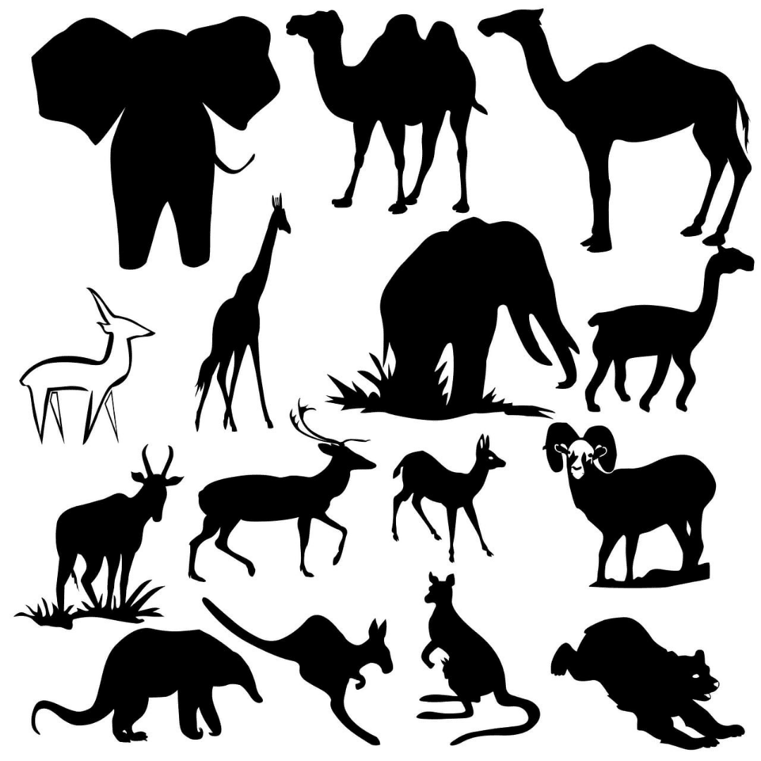 animaux-totem-2-annecy-meythet-cabinet-wakanda