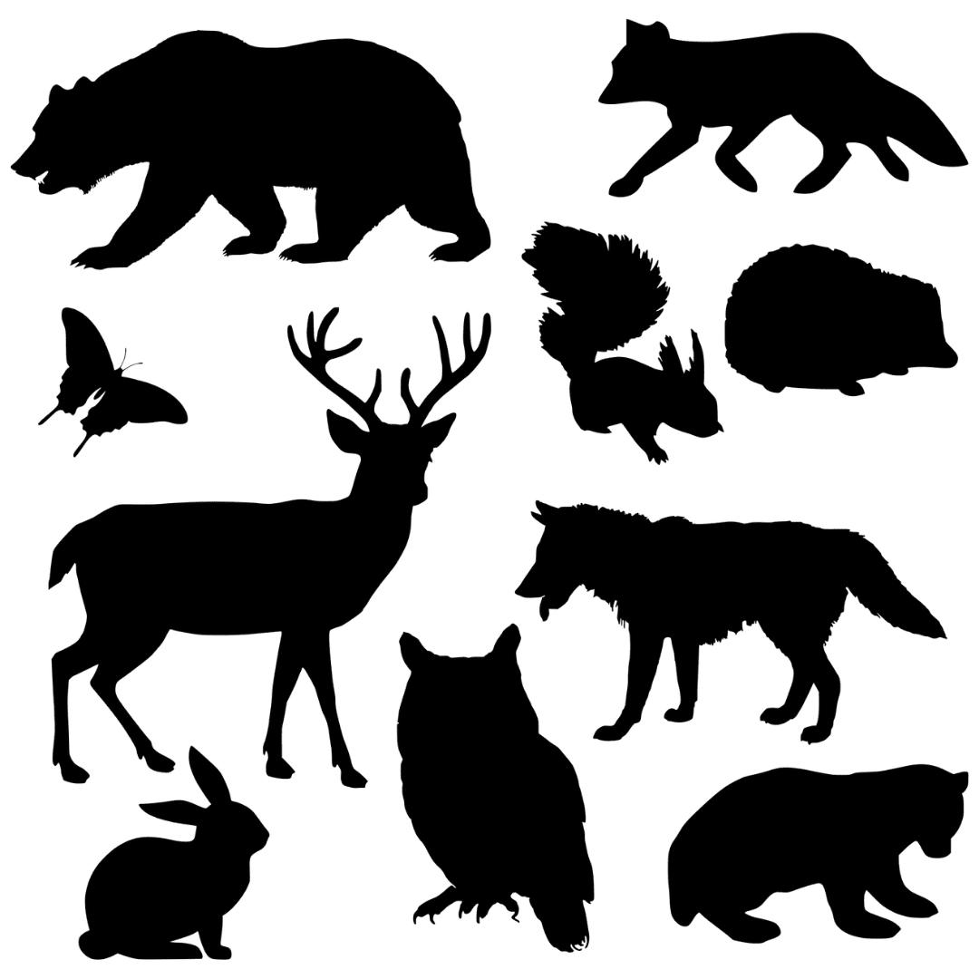 animaux-totem-annecy-meythet-cabinet-wakanda